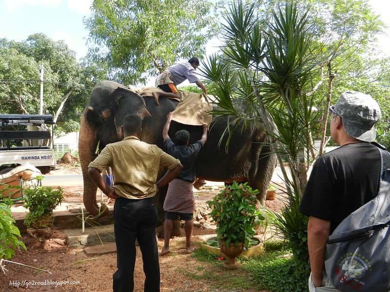 Упряжь слона