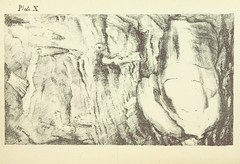 Image taken from page 107 of 'A succinct account of the lime rocks of Plymouth, being the substance of several communications, read before the members of the Geological Society, in London, etc'