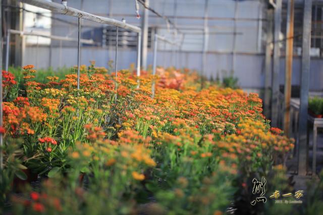 [三峽北大都會樂活園藝農場開放活動] 桃園區農業改良場