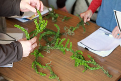 Plant ID for flora of the Wimmera. Workshop delivered by the ANPC October 2013