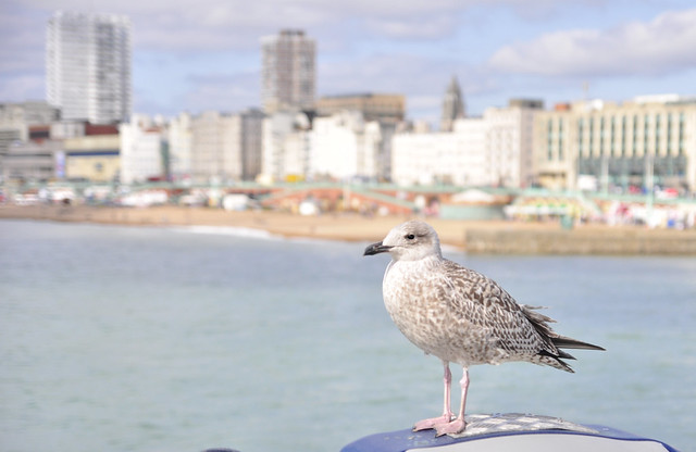 Brighton_postcards (6)