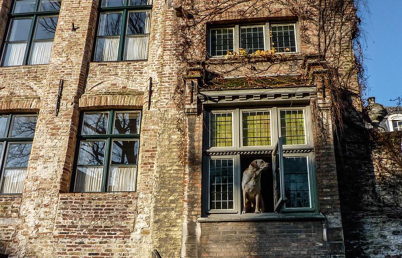 Dog, Bruges, Belgium