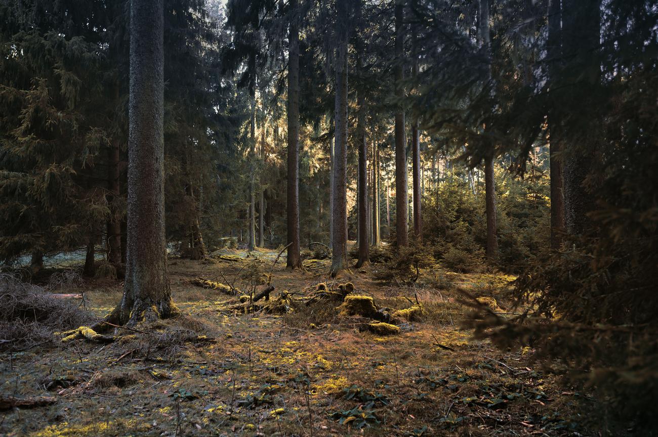 L1000825темный-лес-бля