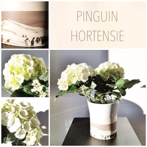 danamas world freitags pinguin hortensie. Black Bedroom Furniture Sets. Home Design Ideas