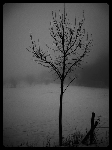 blackandwhite bw tree weather fog greek greece grecia florina makedonia foggylandscape omixli φλώριναflorina foggyplace flickrandroidapp:filter=orca