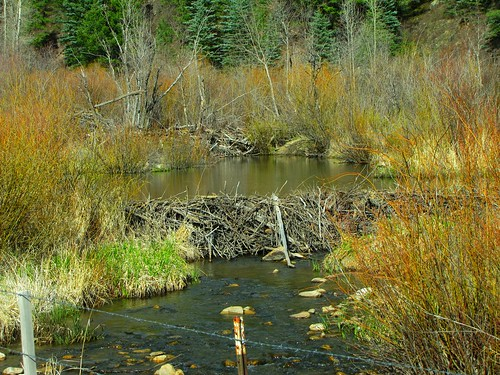 rural colorado rico sanjuanmountains beaverdams