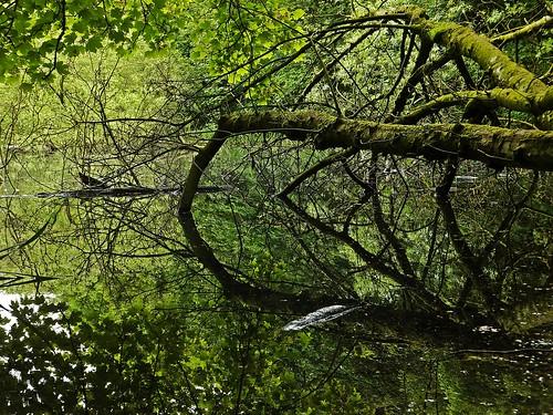 park county trees ireland dublin irish lake nature water river walk falls reservoir waterfalls ward swords dub jacko