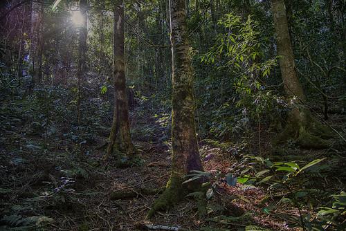 landscape nikon rainforest lamingtonnationalpark oreillysrainforestretreat