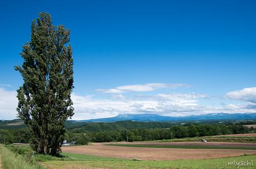 【62-63日目】日本一美しい街の美瑛の丘へ(北海道)