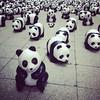 1600 pandas #hongkong #panda #wwf