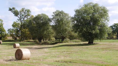 Ballen und Bäume (4676)