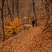 Autumn leaves  by s_gulfidan