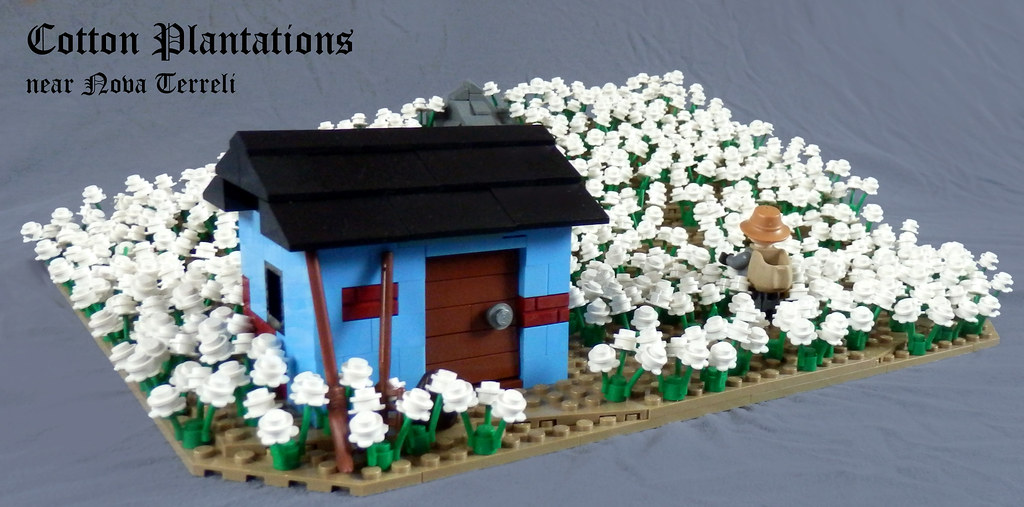 cotton_01