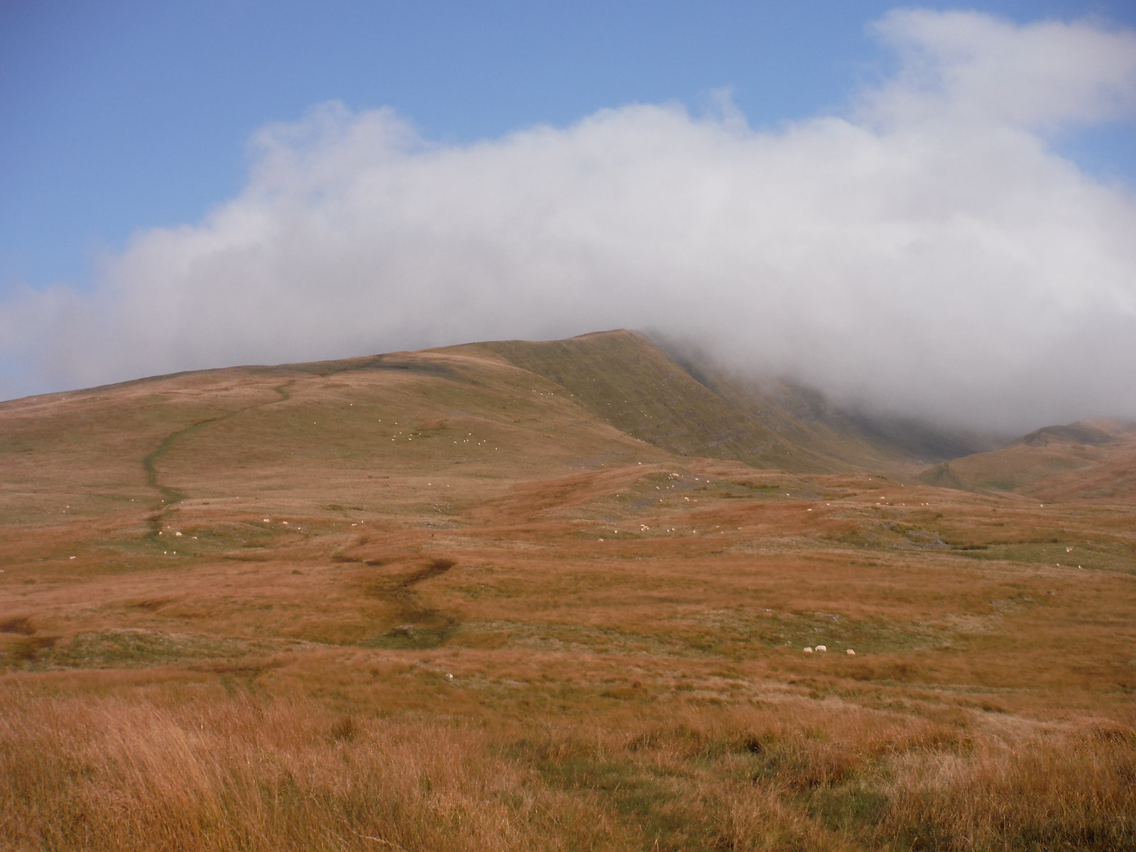 Fan Hir Ridge in clouds SWC Walk 86 Fan Brycheiniog and Fan Foel (The Black Mountain)