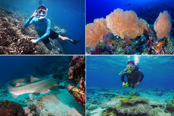 Underwater Maratua 2