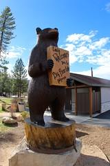 Bear Louie welcomes you
