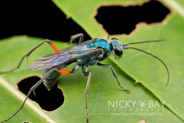 Wasp - DSC_7092