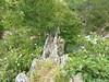 Le canal en 'bois' du moulin de la Tartagine