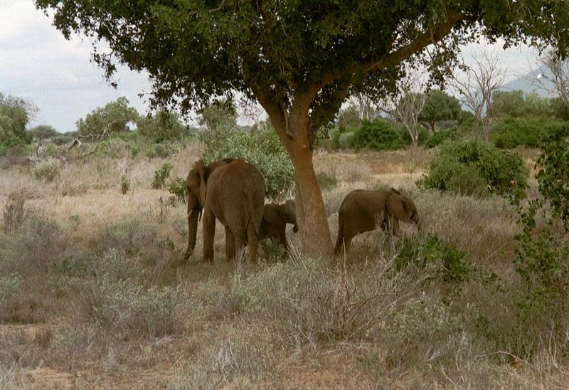 Kenia 2000 - 092