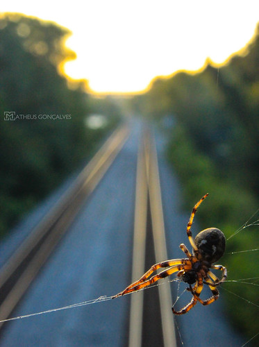 railroad sunset sun train virginia spider spiderweb richmond va rva railrolad