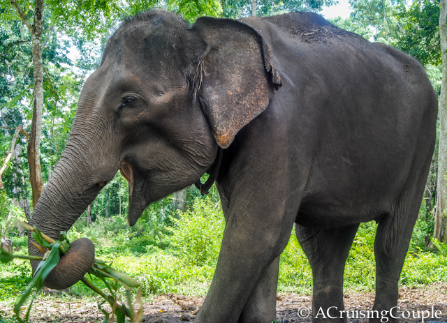 Visit Vietnam Elephant