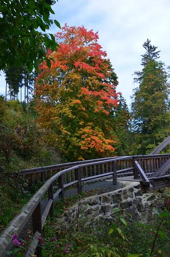 Malerisches Foto von einem roten Baum hinter einer Brücke