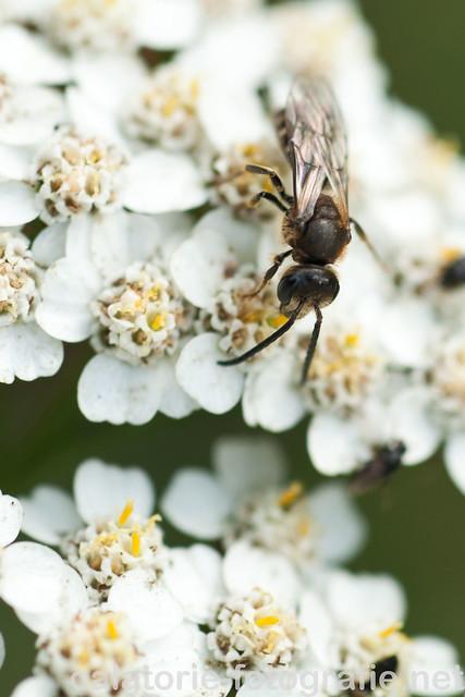 Frumusețea de la un pas de noi - în natură cu Nikon 60 mm Micro f/2,8 AF-D 10501508516_80e6251bf4_z