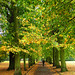 Small photo of Alexandra Park, North London