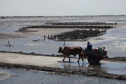 生態好、水質好、傳統養殖及新發展生態觀光產業才有未來。圖片提供:周民雄。