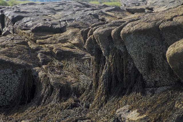 Fortune's Rock; Biddeford, Maine (2013)