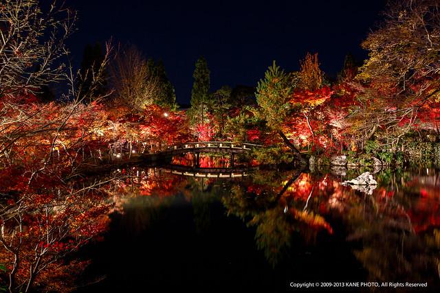 20121124-980C1989-永觀堂夜觀