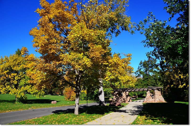 Noway maple in Fall, Chautauqua, Boulder 8