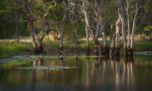 landscape australianlandscape paperbarktrees outdoorbeauty slicesoftime afsnikkor70200mmf28gedvrii flickrstruereflection1 infinitexposure