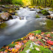 Fall Colors in the Smokies by dfikar