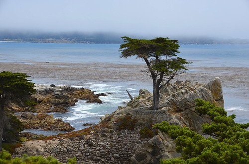 Lone Cypress 2 | by afagen