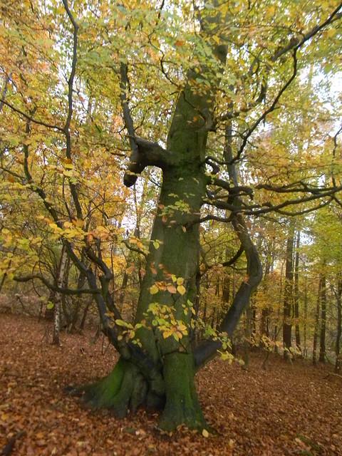 Autumn colour 10