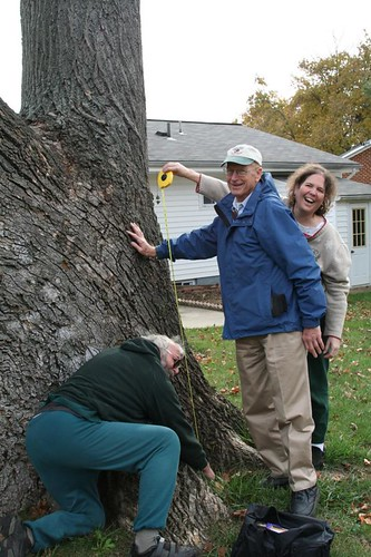 Image of Measuring a Champion Tree