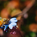 Bee, Huntington Gardens by JulieAndSteve