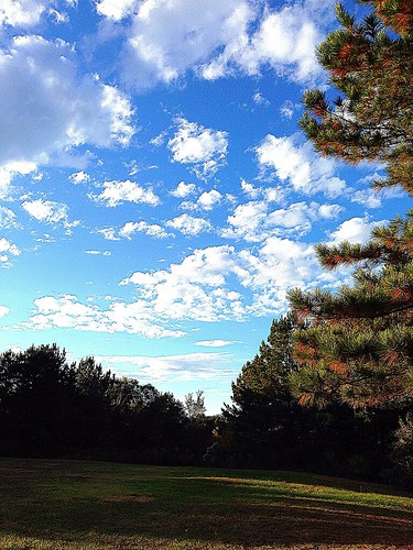 blue trees sky white green fall pine clouds