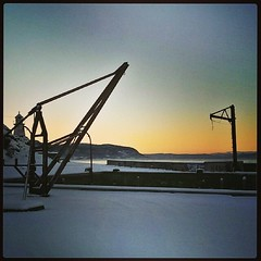 #cranes #winter #sunset #cold #instanature #Trondheim