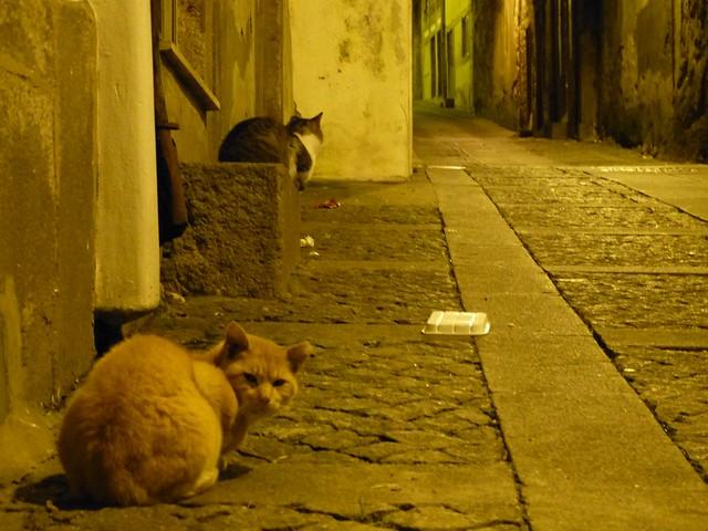 Kissoja Portossa