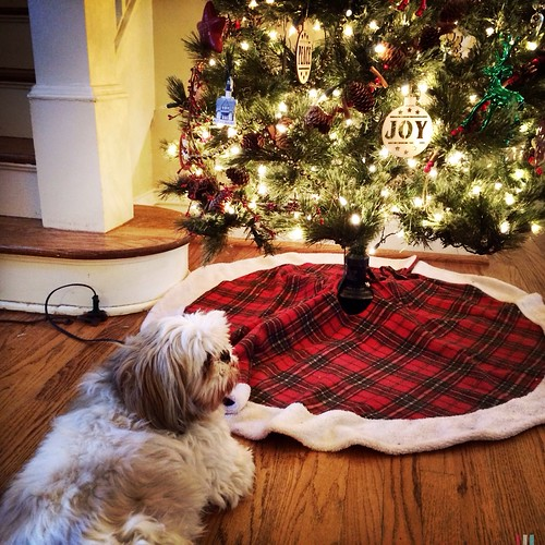 On the 3rd day of Christmas by scoodog / Tom Myler