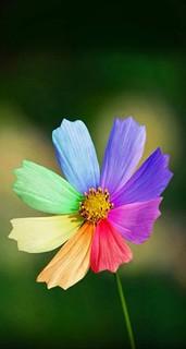 才能の開花