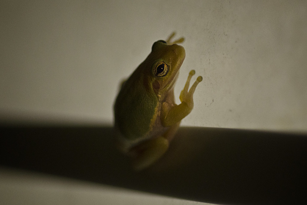 windowfrog