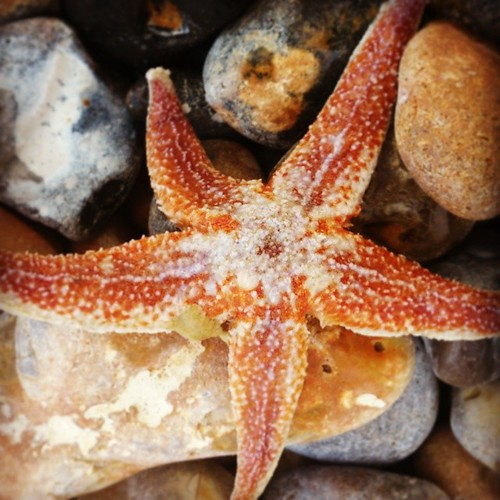 Found a starfish on the beach t'other day.