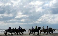 Horses and riders walking along the Pacific coast beach, cloudy day, mixed with sun, Ocean Shores, Washington, USA