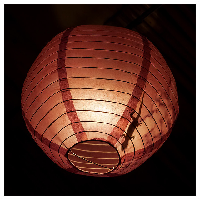 Gecko In A Lantern 1