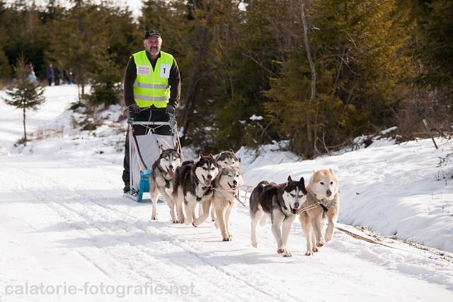 Cupa Beliș 2014 - primul concurs de atelaje canine desfășurat vreodată în județul Cluj  12287341995_0522fcc0c6_z