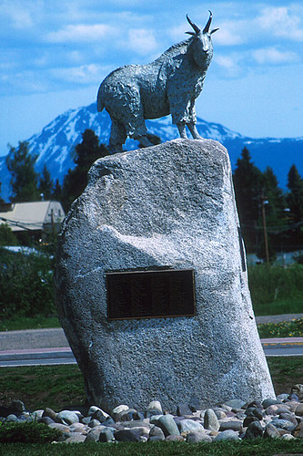 Mountain Goat, Smithers, Yellowhead Highway 16, Bulkley Valley, Northern British Columbia, Canada