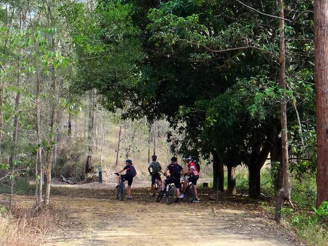 Mango Tree, Wamuran Rail Trail